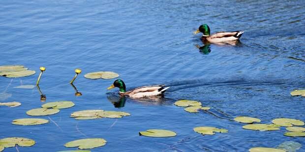 30 прудов приведут в порядок в этом году