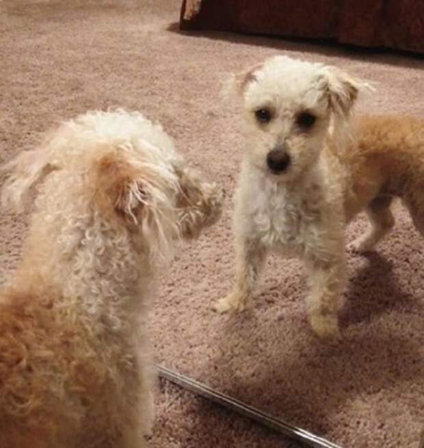 Бездомная собака чудом избежала эвтаназии и смогла очаровать будущую хозяйку