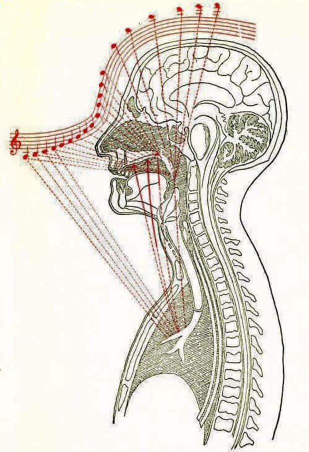 Spievanie ovplyvňuje zdravie človeka - OZ Biosféra