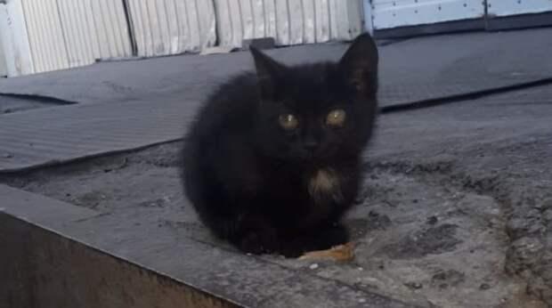 """""""Он запал мне в душу!"""" – сказала девушка и поехала за бездомным котёнком в другой город"""