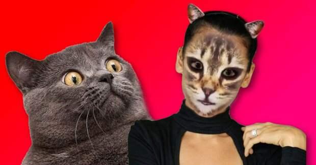 Только посмотри как забавно коты реагируют на кошачий фильтр