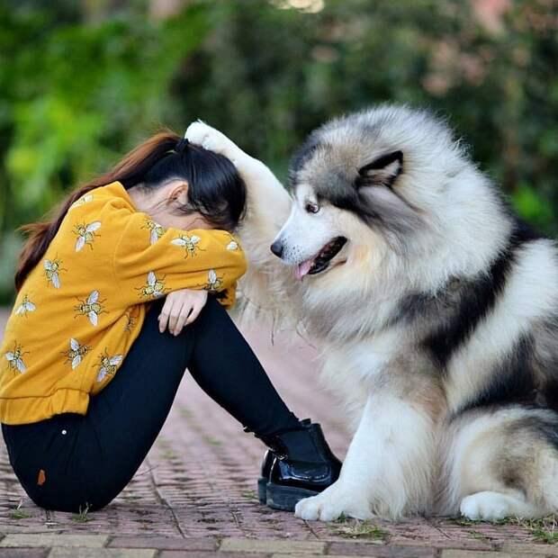 поведение собак с людьми