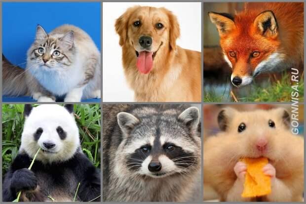 Тест – Выберите животное и узнайте об истинном положении Ваших дел