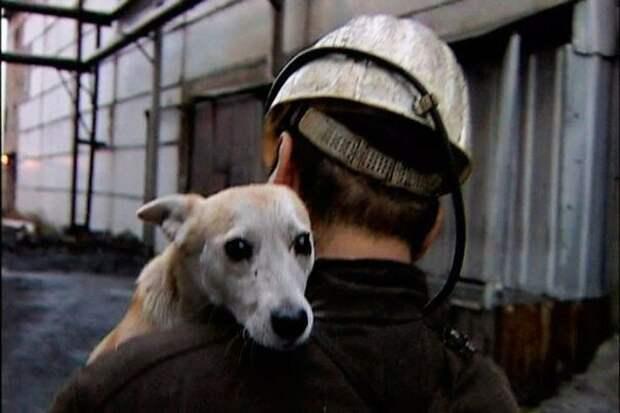 История собаки, которая помогала шахтерам