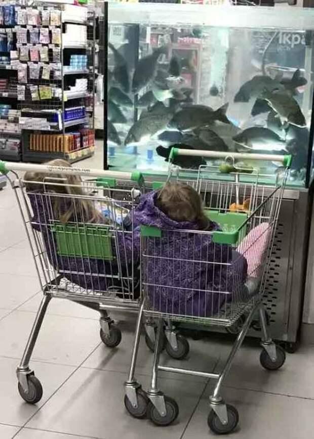 Дети в магазине перед аквариумом
