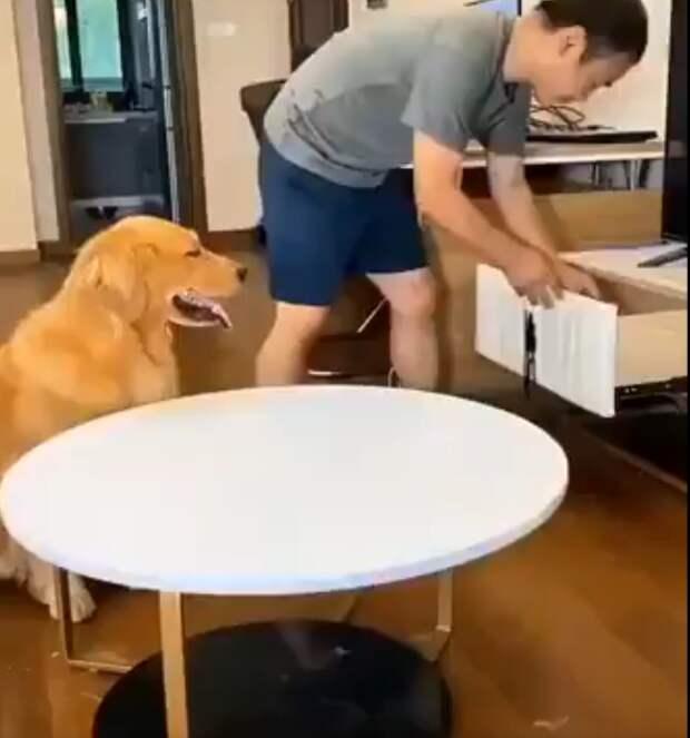 Хитрый пёс