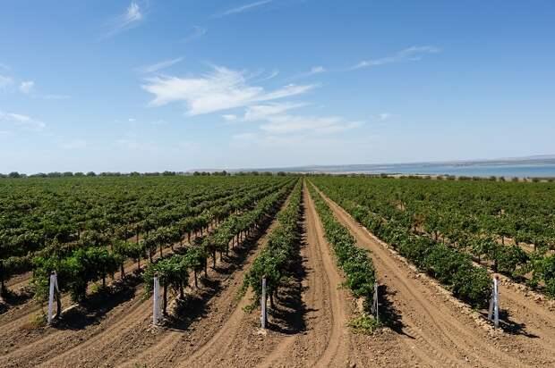 ГК «Ариант» в 2020 году произвела более 90 млн бутылок вина