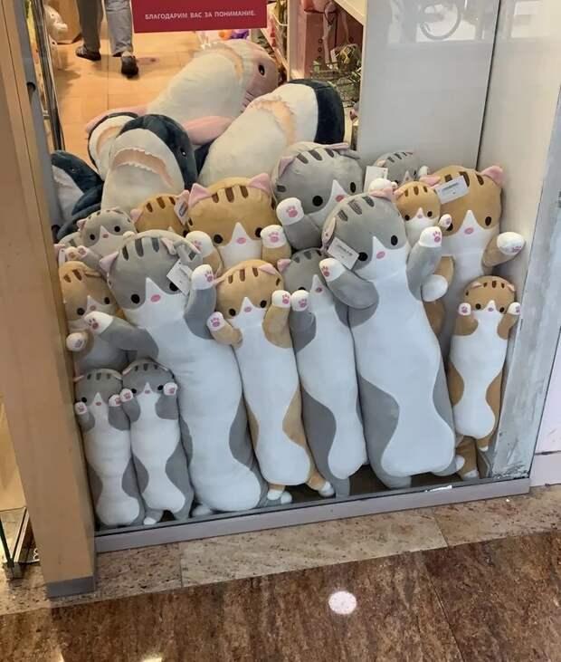 Котики в витрине