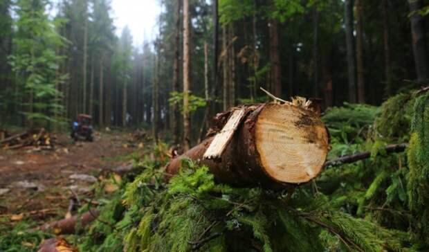 Леса России стоят больше, чем запасы нефти