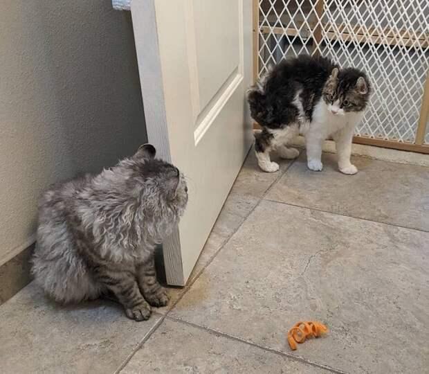 Котенок и кот