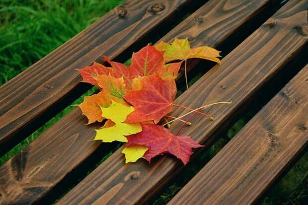 Осенние Листья, Кленовые Листья