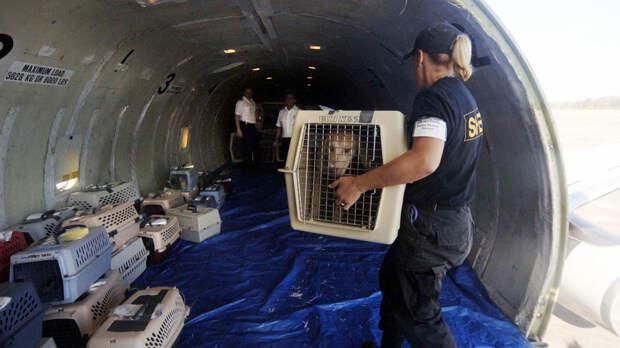 ✈️ Посмотрите, как перевозят собак в багажном отсеке самолета