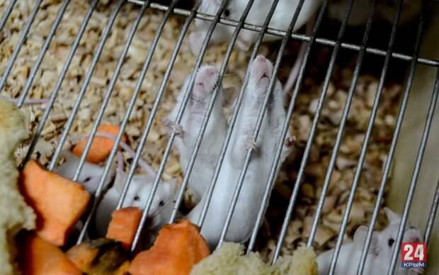 Как крымскую вакцину от коронавируса тестируют на животных: «Крым 24»  удалось побывать в лаборатории. Фото. Видео