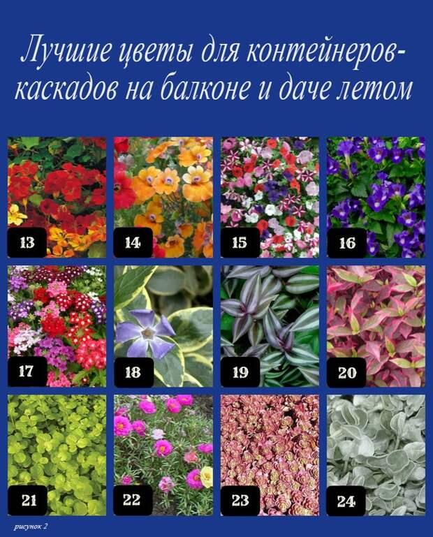 Лучшие цветы для контейнеров-каскадов на балконе и даче летом