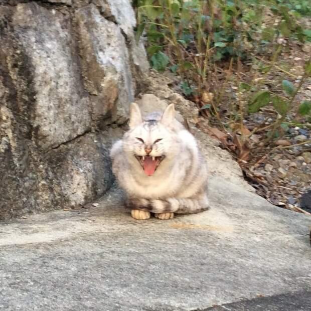 В японском твиттере прошёл чемпионат упоротых животных в категориях «кисики» и «пёси» животные, смешно, твиттер, упоротые, юмор, япония