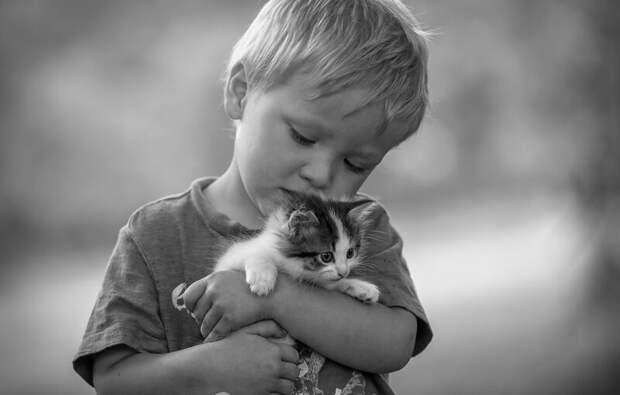 Счастье жизнь, история, котёнок, притча, рассказ, счастье