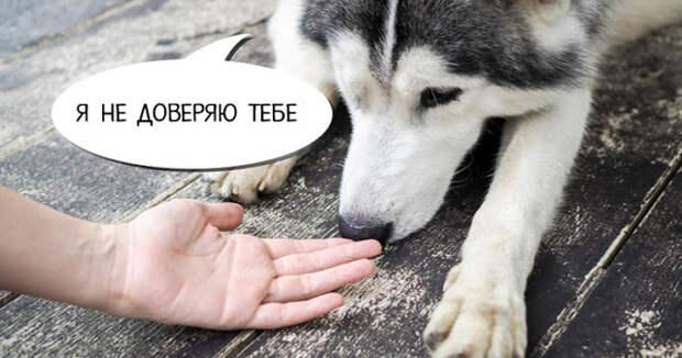Собаки могут распознавать плохих людей