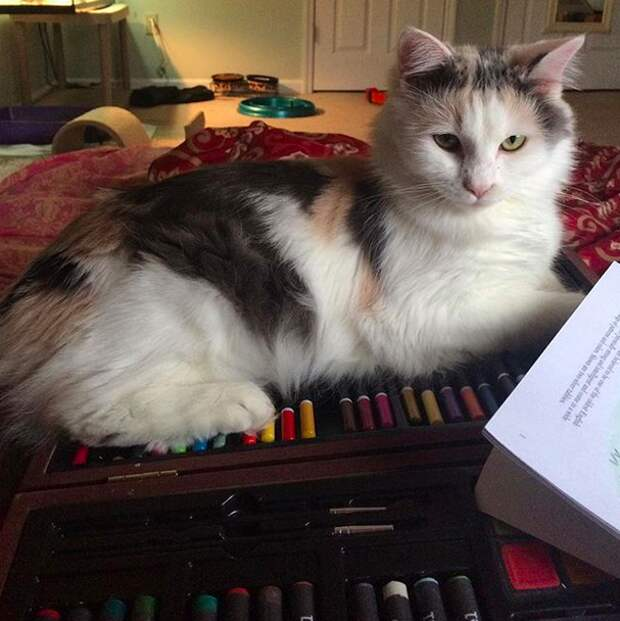 """12. Когда котейки делают """"это"""", они делятся на два типа. Представители или представительницы первого разыгрывают карту """"я тут босс"""" домашний питомец, животные, коты, лежанка, милота"""