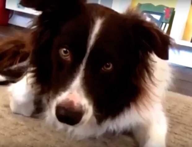 Его лучший друг отправился на радугу, а владельцы не были готовы заводить нового пса и придумали это