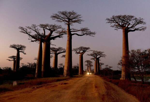 Фотогеничные деревья, которые очаруют своей красотой