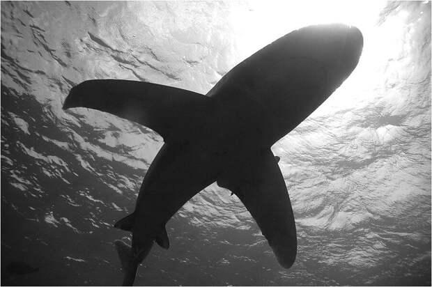 Ученые обнаружили в Мексике древнейшую крылатую акулу