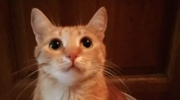 Во время обеда на кухню вошёл рыжий котёнок. Но никакого котёнка в семье не было — он проник в квартиру тайком