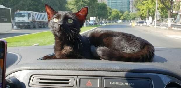 Хозяева делали всё, чтобы их питомица выздоровела и вела полноценную кошачью жизнь домашний питомец, животные, забота, кошка, спасение