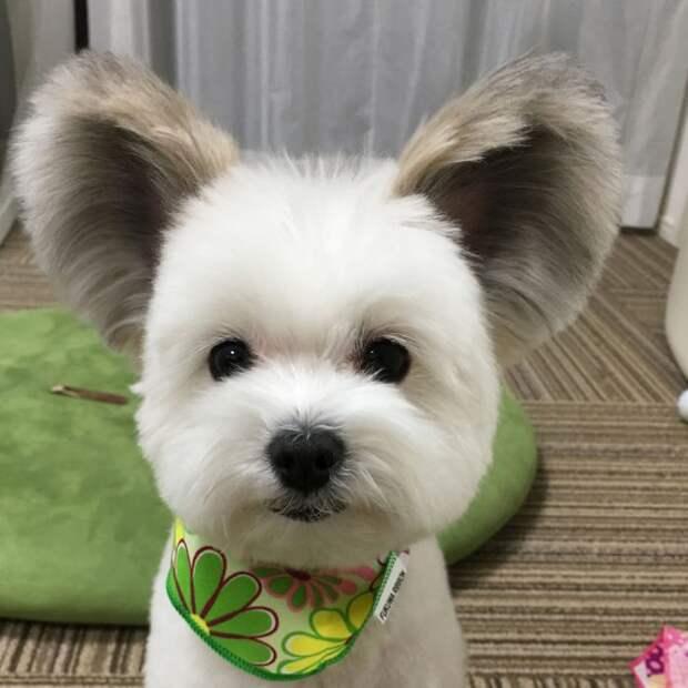 Новая звезда интернета с потрясающими ушами