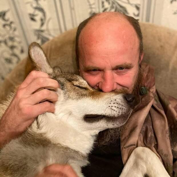 Российская семья приютила в своей квартире дикого волка