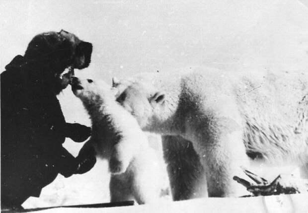 Пограничники Чукотского погранотряда кормят сгущенкой медведицу с медвежатами СССР, 1980-е годы