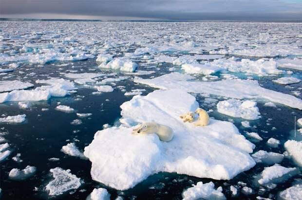 Российские ученые проведут комплексное исследование климатических изменений в Арктике
