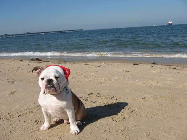 9 причин завести собаку