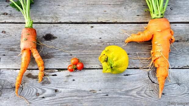 Даешь бодипозитив в мире овощей и фруктов! Фото с сайта www.economist.com