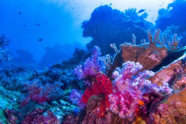 Австралия против включения Большого барьерного рифа всписок объектов, находящихся вопасности