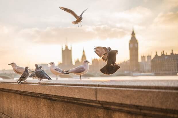 В Англии объявили о введении повторного локдауна с 5 ноября
