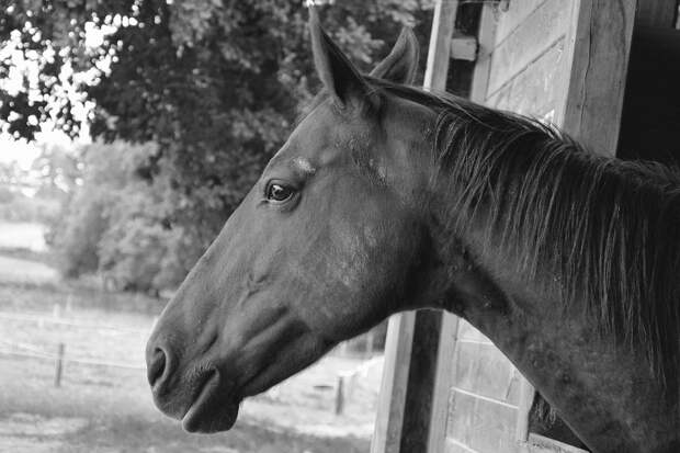 Лошадь, Конюшня, Конно-Спортивный Центр, Животных, Поле