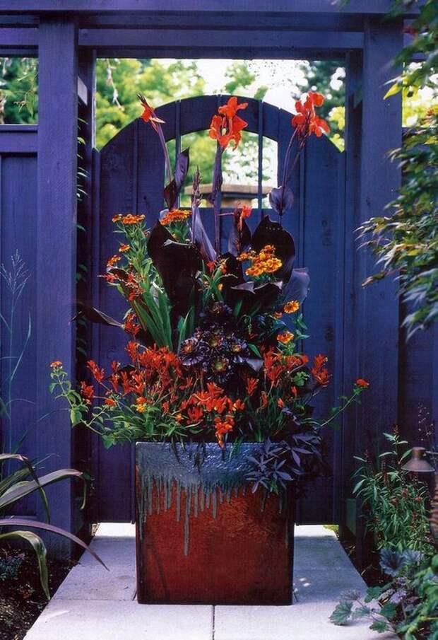 Идей для контейнерного цветоводства