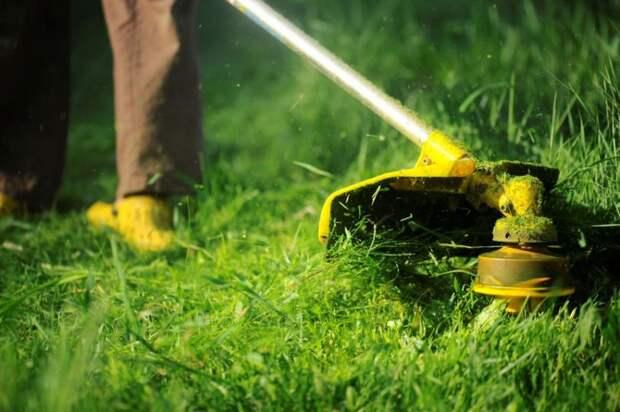Заезжанный газон на Михалковской вновь станет зеленым