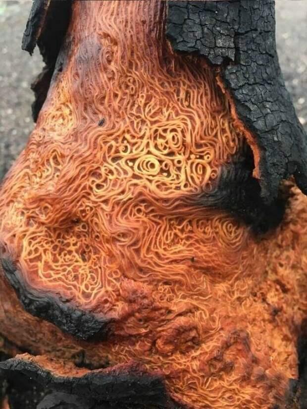 5. Сгоревшее дерево, похожее на спагетти