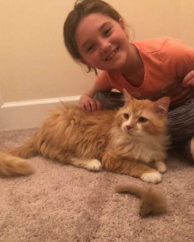 кот и дети