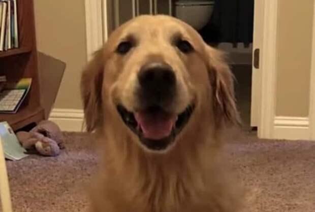 Веселая собака