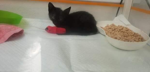 Её отвезли к ветеринару, который обнаружил, что у кошки лихорадка и повышенная температура домашний питомец, животные, забота, кошка, спасение