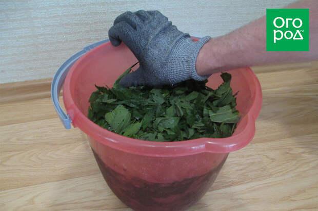 Приготовление настоя из крапивы