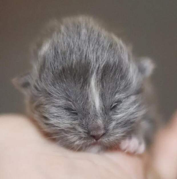 Кот «с двумя мордочками» стал отцом и у него получились классные малыши