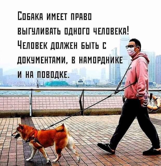 - Мы с дочуркой хотим завести собачку, а муж категорически против...