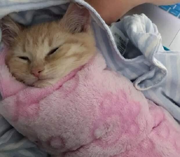 Довольный котенок