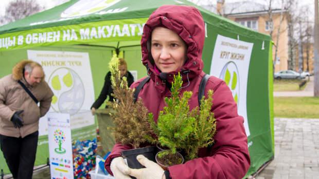 Второй шанс для новогодней елки: в Петербурге энтузиасты спасают горшечные хвойники