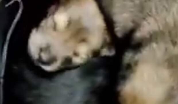 ВЕкатеринбурге намороз выбросили сумку сноворожденными щенками