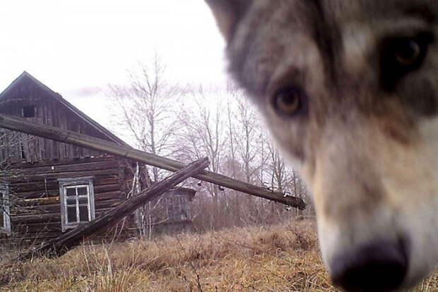 7 необъяснимых явлений Чернобыля случайно угодивших в кадр