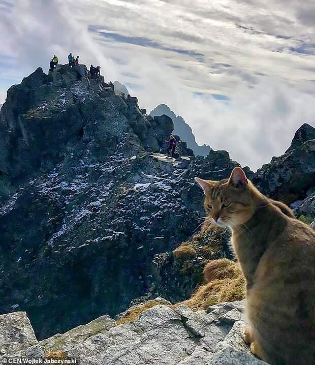 Парень залез на самую высокую гору польши и увидел там... Вылизывающегося кота
